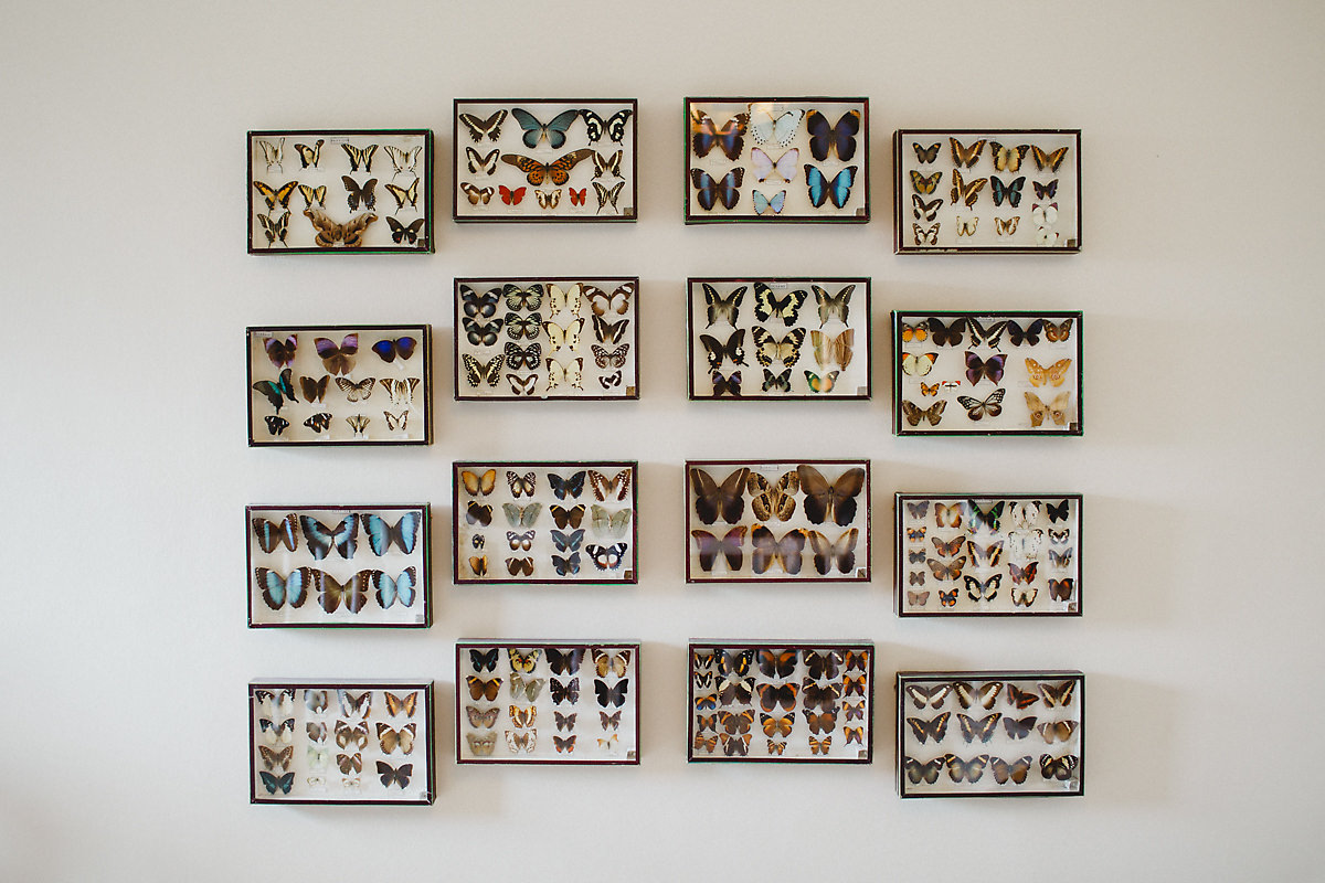 Butterfly collection on the wall