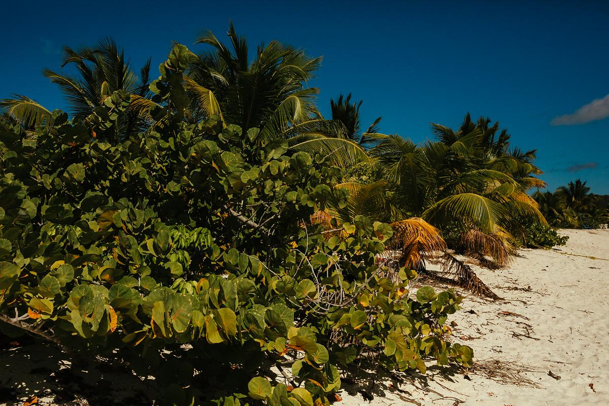 Sandy Island landscape